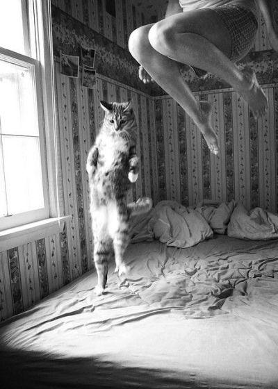 Gatito y yo saltando de alegría al ser elegidos por weloversize